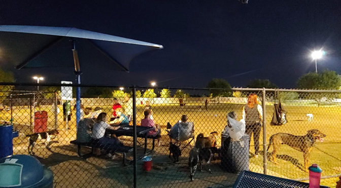 Residents and their dogs at the newly illuminated Dick McComb Dog Park.