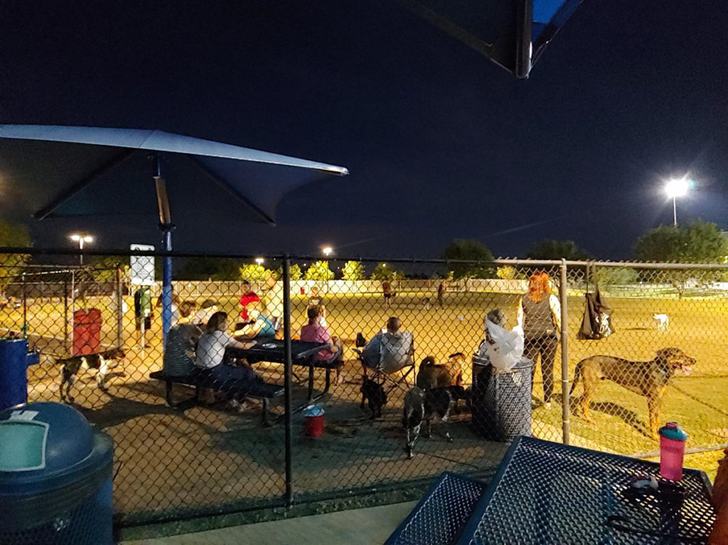 Residents and their dogs enjoying an evening at Dick McComb Park.